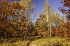 Via attraverso la foresta di autunno Immagini Stock