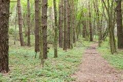 Via attraverso la foresta verde Fotografia Stock Libera da Diritti