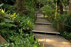 Via attraverso la giungla tropicale Immagini Stock