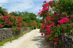 Via bianca della sabbia nell'isola di Taketomi, Okinawa, Giappone Fotografia Stock Libera da Diritti