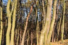 Via che traccia nella foresta Fotografia Stock
