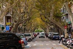 Via commerciale ed automobili sotto gli alberi immagini stock