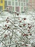 Via coperta di neve caduta Fotografia Stock