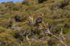 Bird on a Branch. Brown bird with a yellow beak standing on a tree branch Royalty Free Stock Photography