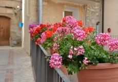 Via decorata con i fiori nei vasi Immagini Stock Libere da Diritti