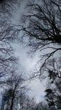 Via degli alberi Immagini Stock