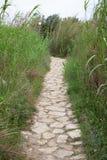 Via del ciottolo in mezzo ad alta erba verde, Rocky Trail indossato della pietra e delle rocce circondate da vegetazione e dalle  Immagine Stock