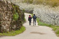 Via del fiore di ciliegia in valle di Jerte, Caceres Primavera Spagna Fotografia Stock Libera da Diritti