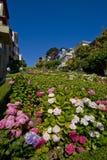 Via del Lombard, San Francisco Fotografia Stock