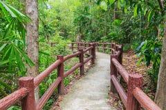 Via del ponte in foresta Fotografia Stock