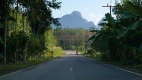 Via dell'asfalto in un cespuglio tropicale video d archivio