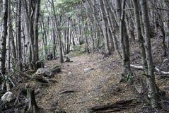 Via della foresta Immagine Stock Libera da Diritti