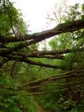 Via della foresta Immagini Stock Libere da Diritti
