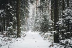 Via della foresta di inverno nell'inverno Immagine Stock