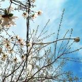 Via della primavera Immagini Stock