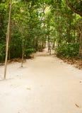 Via della spiaggia attraverso la foresta tropicale Fotografie Stock