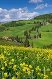 Via della Toscana, d'Orcia di Val fotografia stock libera da diritti
