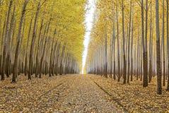 Via di accesso dell'azienda agricola di albero nella caduta Fotografia Stock Libera da Diritti