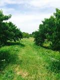 Via di erba e degli alberi Fotografie Stock Libere da Diritti