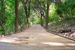 Via di legni alla vista di stupore dalla spiaggia immagine stock libera da diritti