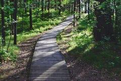 Via di legno attraverso la foresta immagini stock libere da diritti