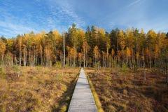 Via di legno di modo del percorso dalla palude all'autunno della foresta Fotografia Stock