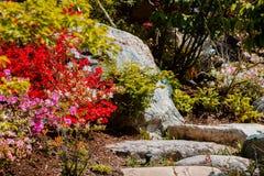 Via di pietra circondata dai cespugli di fioritura variopinti che conducono alla cima di una cascata fotografie stock