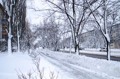 Via di Snowy nella città Alberi di inverno Paesaggio urbano immagini stock