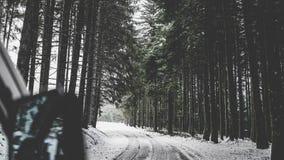 Via di Snowy in una bella foresta con i pini alti fotografia stock libera da diritti