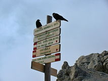Via ferratas in Dolomites - black birds on a tourist guidepost Royalty Free Stock Image