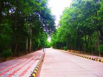 Via in foresta con entrambi i lati degli alberi fotografie stock