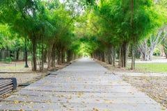 Via in foresta di bambù Immagine Stock
