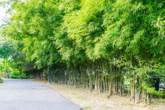 Via in foresta di bambù Immagini Stock