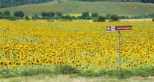 Via Francigena signpost and sunflower field, Tuscany stock photography