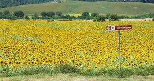 Via Francigena voorzie en zonnebloemgebied, Toscanië van wegwijzers stock fotografie
