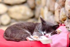 Via Grey Cat che dorme sulla borsa rossa Fotografie Stock Libere da Diritti