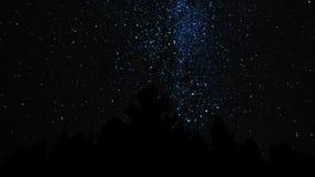 Via Láctea acima da floresta video estoque