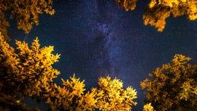 A Via Látea aumenta sobre os pinheiros em um primeiro plano imagem de stock royalty free
