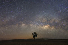 Via Látea bonita com um único treebackground Paisagem com Fotos de Stock