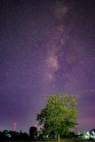 Via Lattea ed albero, galassia Fotografie Stock