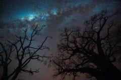 Via Lattea sopra gli alberi del baobab Fotografia Stock Libera da Diritti