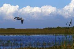 Via navegável do parque nacional dos marismas de Florida Imagem de Stock