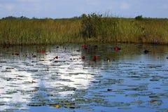 Via navegável do parque nacional dos marismas de Florida Imagens de Stock Royalty Free
