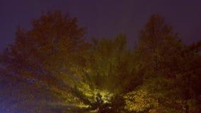 Via nebbiosa della lampada nebbiosa di notte delle luci della foschia della via di mattina alla sfuocatura di notte stock footage