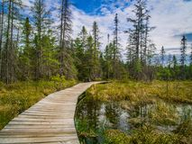 Via nel parco del Algonquin, Canada fotografie stock