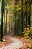 Via nella foresta Fotografie Stock Libere da Diritti