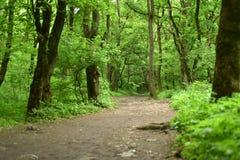 Via nella foresta Immagine Stock