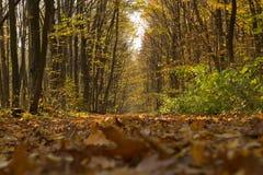 Via nella foresta di autunno immagine stock