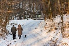Via nella foresta nel giorno soleggiato di inverno Fotografia Stock Libera da Diritti