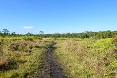 Via nella foresta verde Immagini Stock